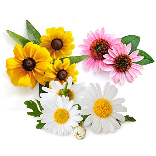 Flower Seeds for Planting Outdoors Perennials in Full Sun or
