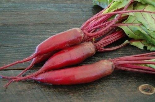 25 graines de betterave Cylindra très longue racine rouge Heirloom Sweet & Delicious Plus TRANCHES