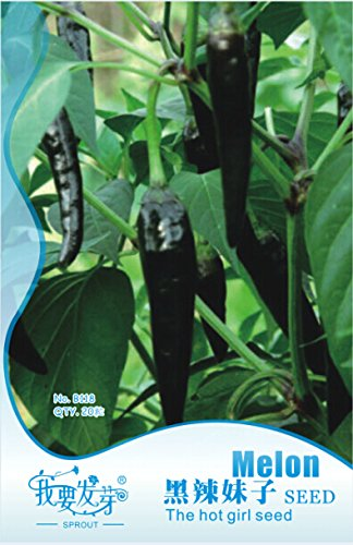 1 Original Pack, 20 graines / paquet, frais hongrois Hot Black Chili Pepper Capsicum fruitescens # NF130