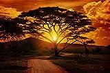 Baum Safari Sonnenuntergang Savanne XXL Wandbild Foto