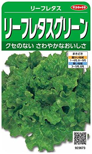 サカタのタネ 実咲野菜3673 リーフレタスグリーン リーフレタス 00923673