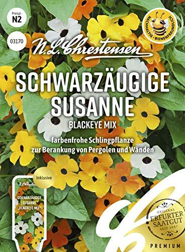 Schwarzäugige Susanne Blackeye Mix, farbenfrohe Schlingpflanze, bienenfreundlich, Samen