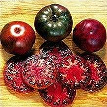 100pcs Black Krim Tomato Seeds Russian Heirloom Vegetable Fruit Bonsai Plants