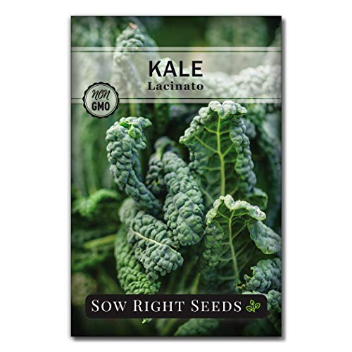 Sow Right Seeds - Lacinato Kale Seed for Planting - Non-GMO Heirloom Packet with Instructions to Plant a Home Vegetable Garden, Great Gardening Gift (1)