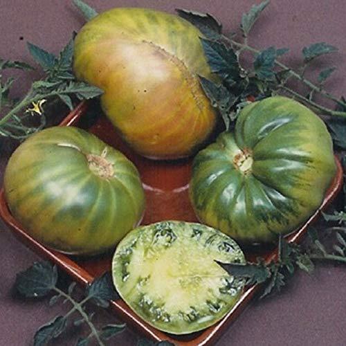 blush tomato seeds - 8