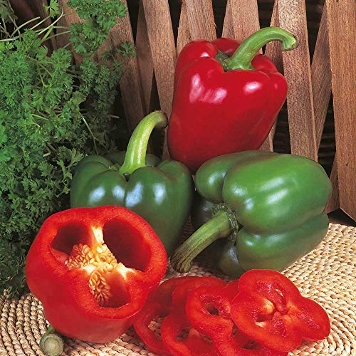 Kings Seeds - Pepper (Sweet) New Ace F1-25 Seeds