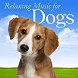 Love and Trust Animal Care: Gentle Song for Pet and Owner Bonding