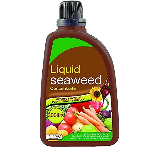 CUQOO Organic Liquid Seaweed Fertiliser in 1L – Premium Plant Food...