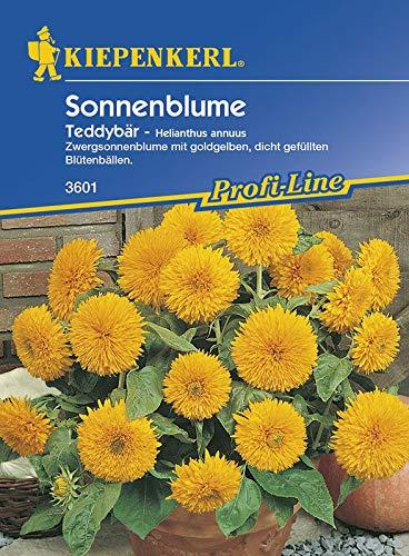 Sonnenblume Teddybär von Kiepenkerl