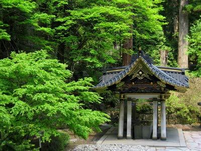 Japanische Zeder Cryptomeria japonica frosthart Bonsai geeignet 10 Samen