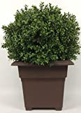 Outdoor Artificial UV Rated 2 ft...