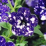 SUBTLE 200粒 アサガオの種 ガーデンの装飾 植物の種 花 高い発芽率 簡単に育てる 観葉植物 開花 園芸