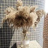60cm Pampas Gras Getrocknete Blume Reed Hochzeit Dekoration Heu Herbst Home Natürliche Dekoration Blumenstrauß Retro Blume Getrocknete Blumen (Color : 20 Pieces, Size : 60cm) - 6