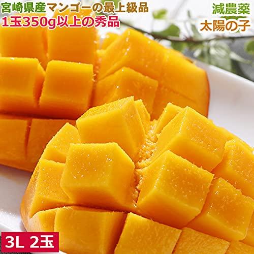 減農薬 宮崎産マンゴー 太陽の子 大玉 3L 2玉 約1kg 化粧箱入 贈答用