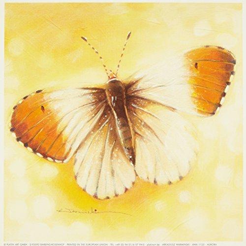 Eurographics AWA1123 wydruk artystyczny 18 x 18 cm Aurora autorstwa Arkadiusza Warmińskiego