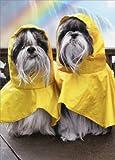Rain Poncho Dogs At Waterfalls - Avanti Funny Shih Tzu Anniversary Card