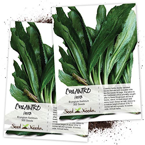 Seed Needs, Culantro Seeds for Planting (Eryngium foetidum) Twin Pack of 300 Seeds Each Non-GMO - NOT Cilantro Seeds