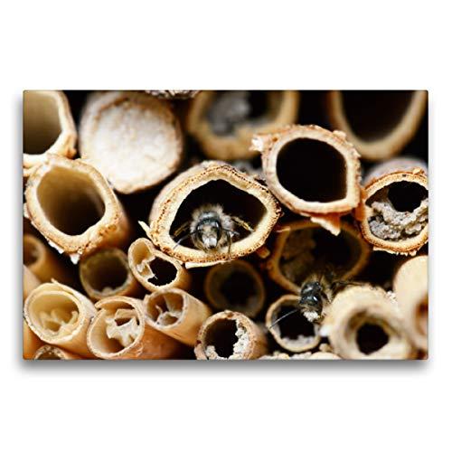 CALVENDO Premium Textil-Leinwand 75 x 50 cm Quer-Format Wildbienen am Insektenhotel, Leinwanddruck von Anja Frost