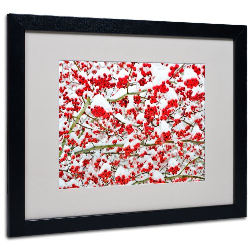 Winter Berries in the Snow by Kurt Shaffer, Black Frame, 16 by 20-Inch