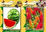 GEOPONICS SEED acqua n, Celosia semi (25 per pacchetto)