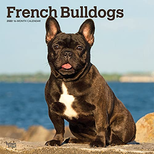 French Bulldogs 2022 12 x 12 Inch Monthly Square Wall Calendar, Animals Dog Breeds DogDays