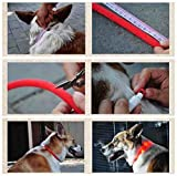Licht LED-Leuchthalsband für Hunde, 70 cm, universell kürzbar – Rot by CASCACAVELLE - 3