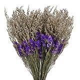 XHXSTORE Ramo de Flores Secas Violeta Flor Myosotis Flores Secas Naturales para Deco Mesa Arreglo Floral de Boda en casa DIY