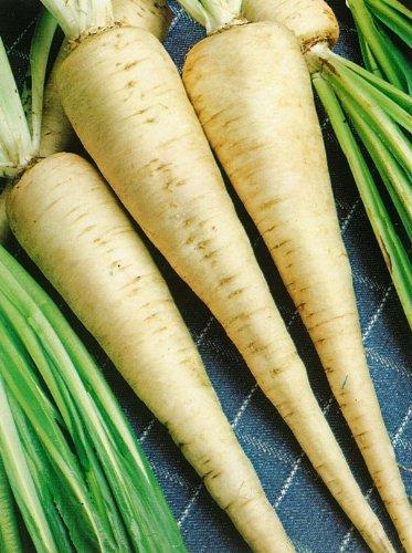 JustSeed - graines de Legumes Persil Hambourg Rooted 500 graines de navet Economy Lot