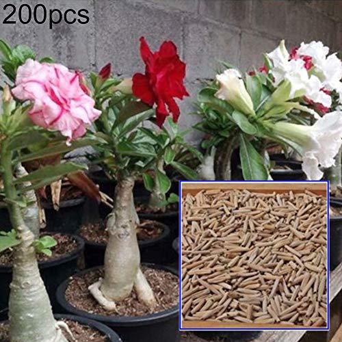 Desert Rose Samen, 200 Stück Adenium Wüstenrosen Samen Staudenpflanzen Garten Balkon Pflanzen-Dekor