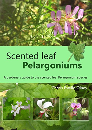 Scented leaf pelargoniums: A gardeners guide to the scented leaf pelargonium species
