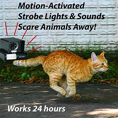 PREDATORGUARD PestAway Outdoor Animal & Cat with Motion Sensor Stops Pest Animals Destroying Your Gardens & Yard