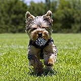 Zoom IMG-1 toozey giochi per cani di