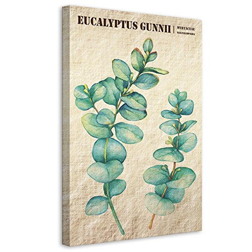 Vertikale Décoration Murale Tableau Toile Eucalyptus Gunnii Style Botanique 40 x 60 cm