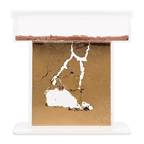 Sand Ant Farm T (Anthill, Formicarium, Educational, Ants)