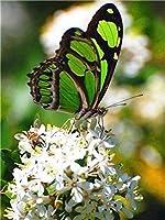 クロスステッチ刺繍 キット40x50cm DIY 緑の蝶 初心者刺しゅうキット11CTプリント済みキャンバスクロスステッチの布刺繍キット手作り家具の装飾 針仕事(フレームレス)