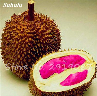 10 Pcs Durian Seeds délicieux roi de fruits sains Tropical Giant Trees Jardin Plantes Bonsaï Non-GMO Haute Nutrition 5