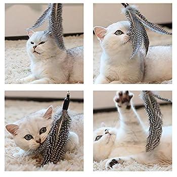WLOT 8 pcs Jouet Chat Plume Jouet Intelligent Jouet Interactif Pen Teaser avec Un Perche Télescopique avec 7 Pointes de Rechange pour Chat Kitty