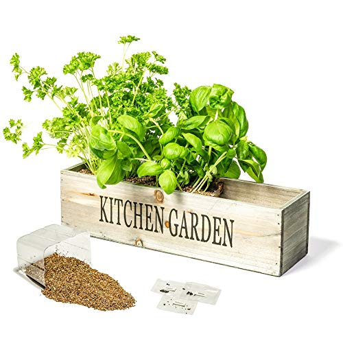 Primrose Herbes De Cuisine – Jardinière