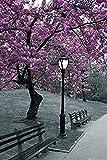 Buyartforless New York Poster Central Park Blossom 36x