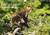 Freigänger - Hauskatzen unterwegs (Wandkalender 2020 DIN A4 quer)