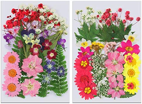 71 Pieces Real Dried Pressed Flowers and Leaves Mixed Natural Dry Flowers Daisies Leaves Hydrangeas product image