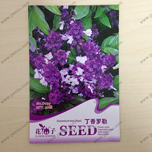 paquet de graines originales Vanilla Fleur, doux graines de basilic parfumées, floraison à maturité 60 jours, 30 particules de graines / sac