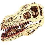 Dinosaurio Velociraptor cabeza cráneo réplica decoración, resina hecha modelo de peces acuario accesorios simulados animales esqueleto enseñanza apoyo acuario decoración colección