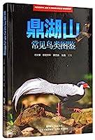 鼎湖山常见鸟类图鉴