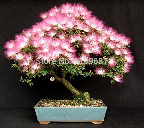9 graines Bosai populaires d'arbres au total plus de 200 graines mini-graines de bonsaï Paquet Premium Bonsai envoyer un cadeau