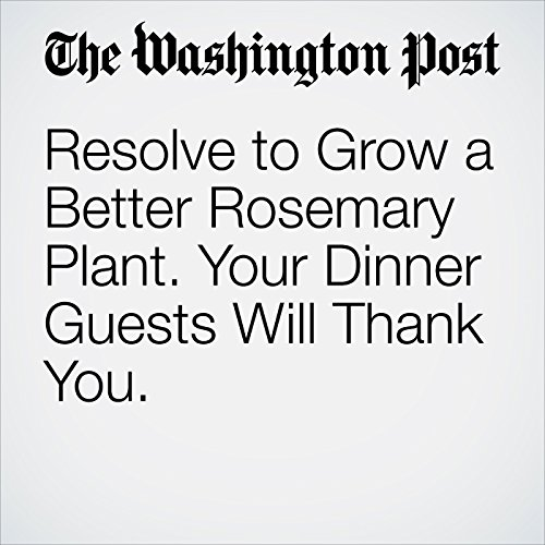 Resolve to Grow a Better Rosemary Plant. Your Dinner Guests Will Thank You. cover art