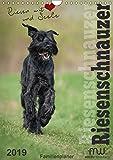 Riesenschnauzer - Riesen mit Herz und Seele (Wandkalender 2019 DIN A4 hoch): Schwarze Riesenschnauzer - fotografiert im perfekten Moment (Planer, 14 Seiten ) (CALVENDO Tiere) - Martina Wrede