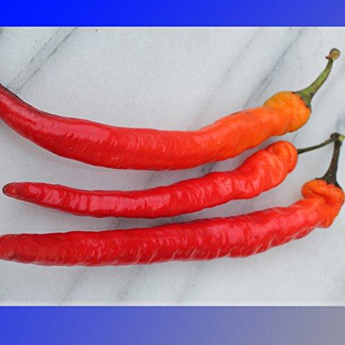 (LTC hongrois * Ambizu *) longue mince Cayenne Hot Pepper Graines bio, Paquet professionnel, 50 graines