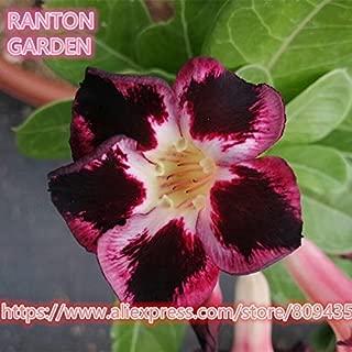SwansGreen RANTON GARDEN 5 PCS
