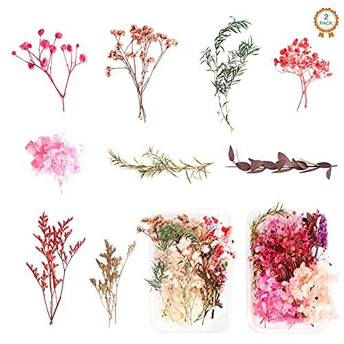 2 Cajas Flores Secas Prensadas Naturales, Flores Secas Mezcladas, Hojas Secas Mixtas, Conjunto de Flores Secas para DIY Decoración Tarjetas Álbum Recorte Velas Manualidades
